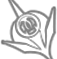 Nightblade class icon eso builds